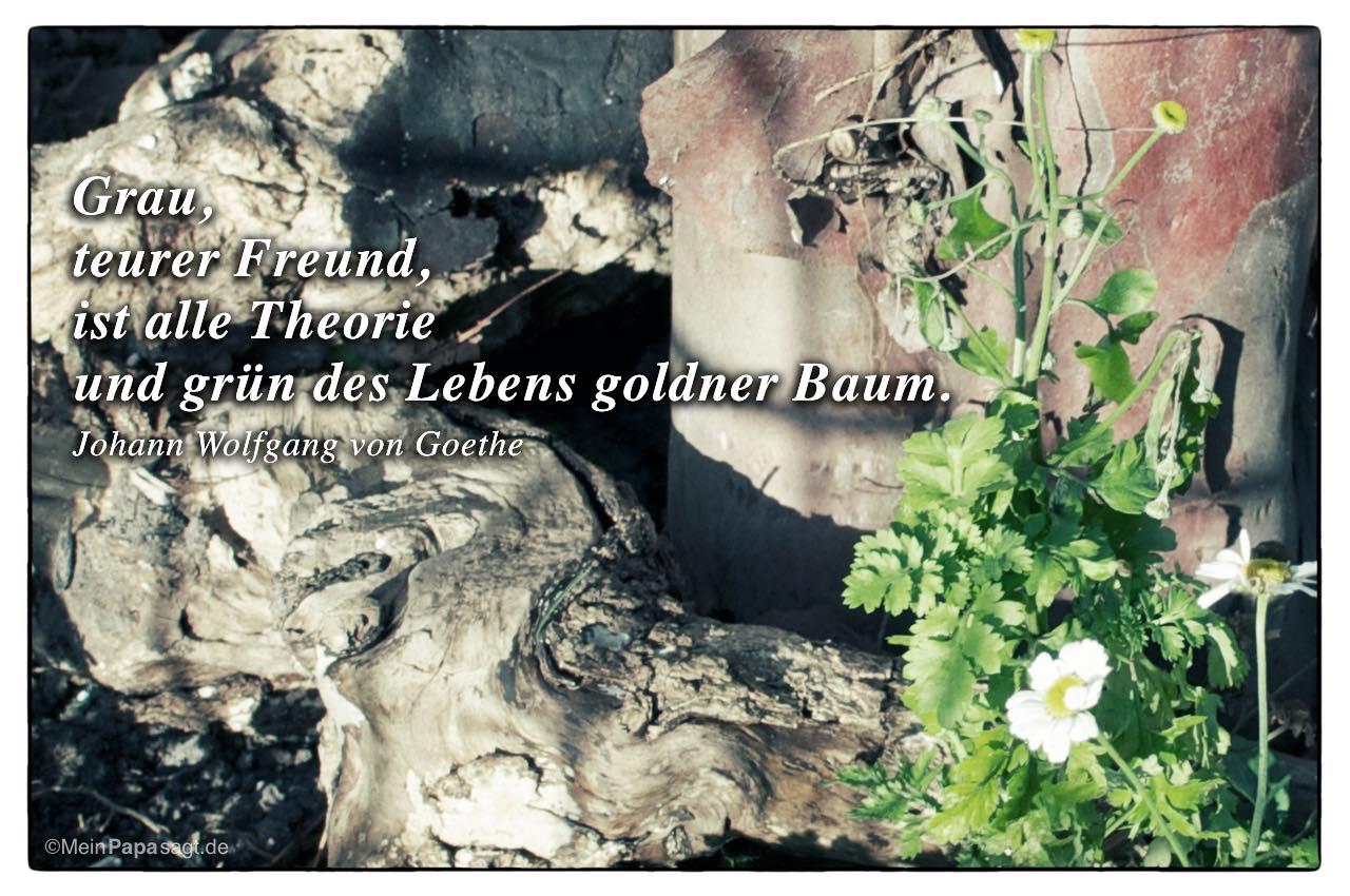 Alter Baumstamm mit dem Wolfgang von Goethe Zitat: Grau, teurer Freund, ist alle Theorie und grün des Lebens goldner Baum. Johann Wolfgang von Goethe