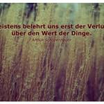 Gräser mit dem Arthur Schopenhauer Zitat: Meistens belehrt uns erst der Verlust über den Wert der Dinge. Arthur Schopenhauer