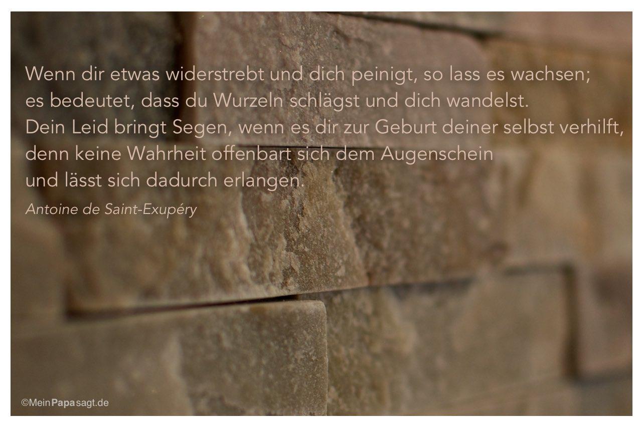 Mauerwerk mit dem Antoine de Saint-Exupéry Zitat: Wenn dir etwas widerstrebt und dich peinigt, so lass es wachsen; es bedeutet, dass du Wurzeln schlägst und dich wandelst. Dein Leid bringt Segen, wenn es dir zur Geburt deiner selbst verhilft, denn keine Wahrheit offenbart sich dem Augenschein und lässt sich dadurch erlangen. Antoine de Saint-Exupéry