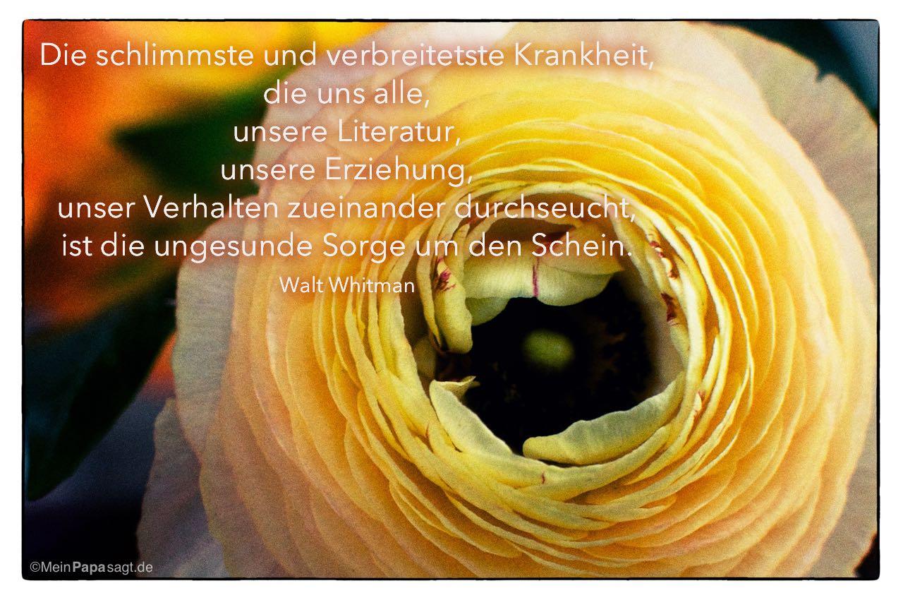 Ranunkel mit dem Walt Whitman Zitat: Die schlimmste und verbreitetste Krankheit, die uns alle, unsere Literatur, unsere Erziehung, unser Verhalten zueinander durchseucht, ist die ungesunde Sorge um den Schein. Walt Whitman