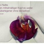 Orchidee mit dem Baltasar Gracian Zitat: Mit dem Fleiße bringt ein mittelmäßiger Kopf es weiter als ein überlegener ohne denselben. Baltasar Gracian