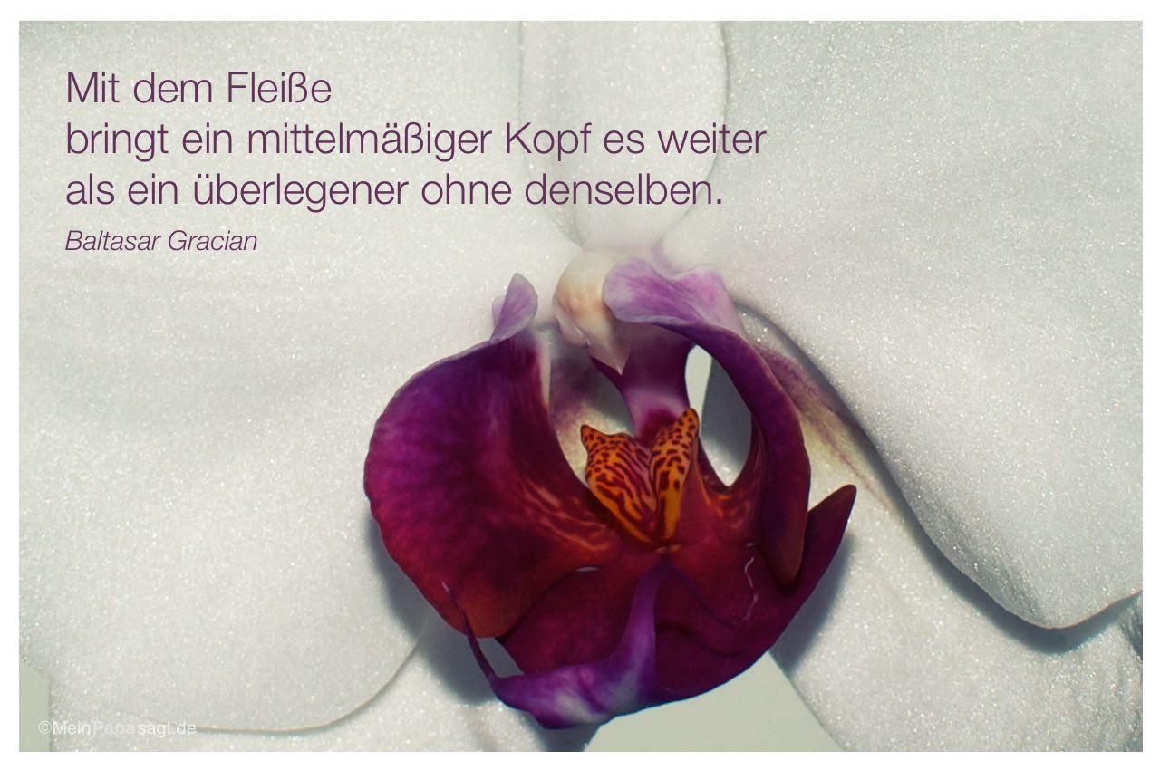 Orchideen Kopf mit dem fleiße bringt ein mittelmäßiger kopf es weiter als ein