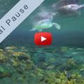Mach mal Pause <br>mit Schildkröten im Korallenriff