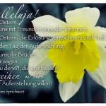 Osterglocken mit dem lateinischen Sprichwort: Halleluja! Es ist Ostern. Lasst uns mit Freunden einander umarmen. Es ist Ostern, die Erlösung von Schmerz und Tod. Es ist der Tag der Auferstehung. Lasst uns, ihr Brüder, Bruder sagen auch zu denen, die uns hassen! Verzeihen wir alles um der Auferstehung willen! Lateinisches Sprichwort