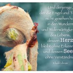 Knospe mit dem Khalil Gibran Zitat: Und derjenige, der die Engel und Teufel nicht gesehen hat in den Wundern und Widerwärtigkeiten des Lebens, dessen Herz bleibt ohne Erkenntnis und dessen Seele ohne Verständnis. Khalil Gibran