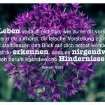 Knoblauch Blume mit dem Sawaki Kōdō Zitat: Das Leben verläuft nicht so, wie du es dir vorstellst. Doch wenn du aufhörst, dir falsche Vorstellung zu machen und stattdessen den Blick auf dich selbst wendest, wirst du erkennen, dass es nirgendwo um dich herum irgendwelche Hindernisse gibt. Sawaki Kōdō