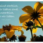 Sonnenblumen mit dem Karl Jaspers Zitat: Wir sind sterblich, wo wir lieblos sind, unsterblich, wo wir lieben. Karl Jaspers