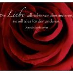 Rote Rose mit dem Dietrich Bonhoeffer Zitat: Die Liebe will nichts von dem anderen, sie will alles für den anderen. Dietrich Bonhoeffer