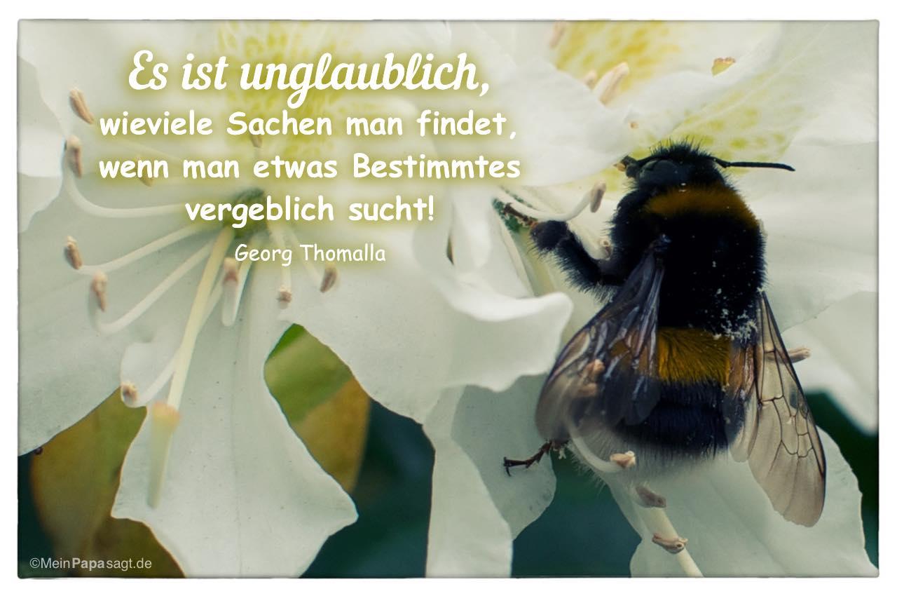 Biene auf Blüte mit dem Georg Thomalla Zitat: Es ist unglaublich, wieviele Sachen man findet, wenn man etwas Bestimmtes vergeblich sucht! Georg Thomalla