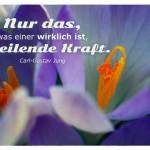 Krokusse mit dem Carl-Gustav Jung Zitat: Nur das, was einer wirklich ist, hat heilende Kraft. Carl-Gustav Jung