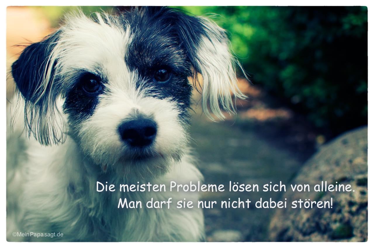 Junge Hündin mit dem Spruch: Die meisten Probleme lösen sich von alleine. Man darf sie nur nicht dabei stören!