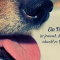 Ein Freund ist jemand, der Dich mag...