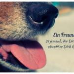 Hunde Schnauze mit dem Spruch: Ein Freund ist jemand, der Dich mag, obwohl er Dich kennt.