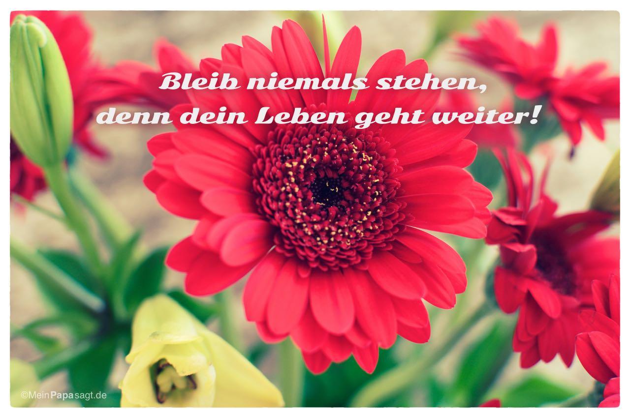 Gerbera mit dem Spruch: Bleib niemals stehen, denn dein Leben geht weiter!