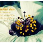Blütenkelch mit dem Laotse Zitat: Nichts tun ist besser als mit viel Mühe nichts schaffen. Laotse