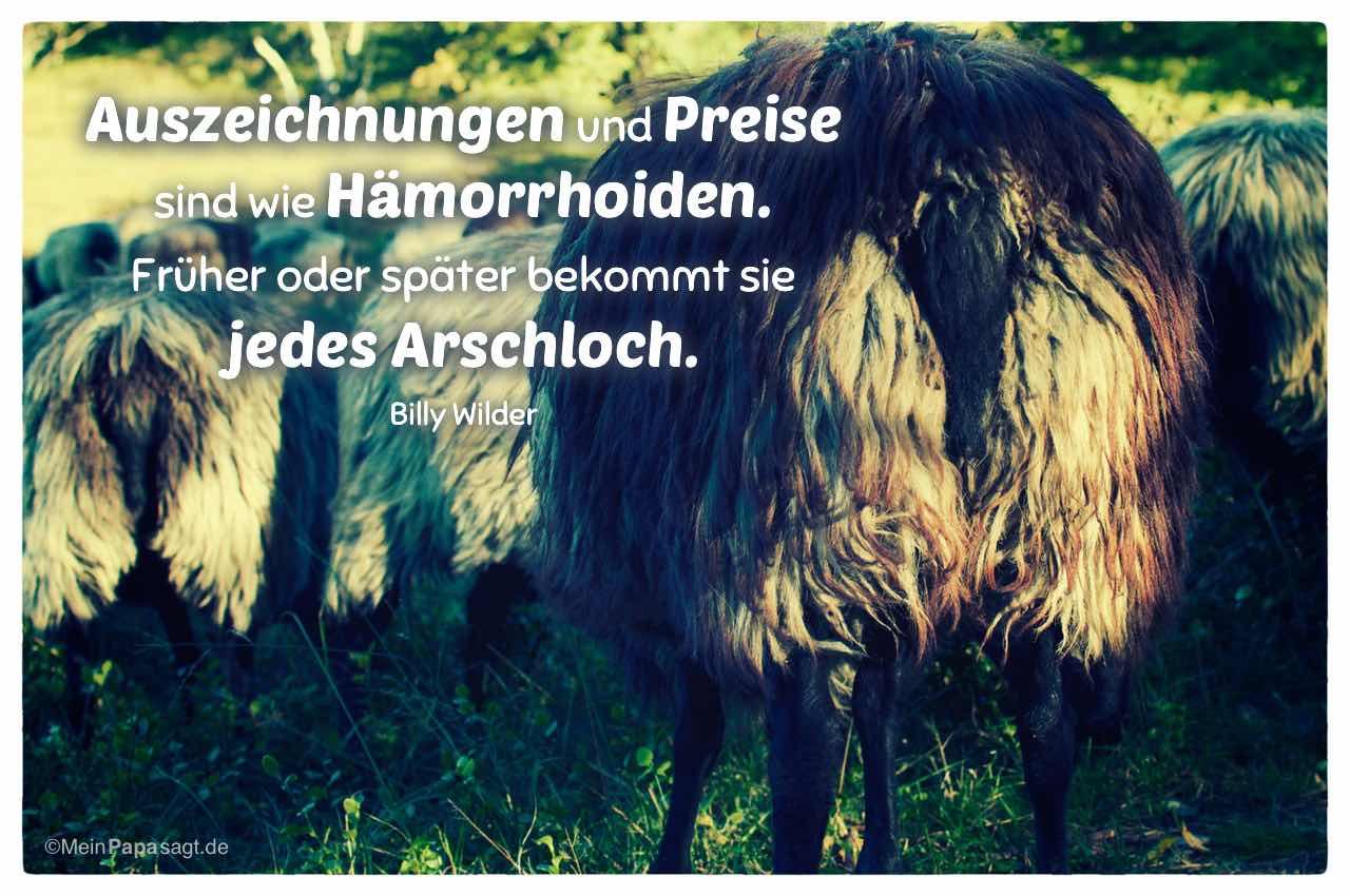 Schafe von Hinten mit dem Billy Wilder Zitat: Auszeichnungen und Preise sind wie Hämorrhoiden. Früher oder später bekommt sie jedes Arschloch. Billy Wilder