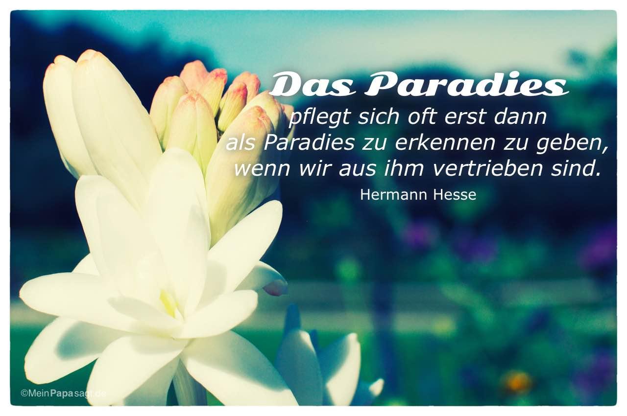paradies sprüche Das Paradies pflegt sich oft erst dann als Paradies zu erkennen zu  paradies sprüche