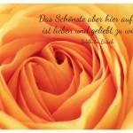 Orange Rose mit dem Wilhelm Busch Zitat: Das Schönste aber hier auf Erden ist lieben und geliebt zu werden. Wilhelm Busch