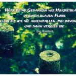Fluss mit spiegelnden Blätter und der Zen-Weisheit: Wirf deine Gedanken wie Herbstblätter in einen blauen Fluss, schau zu, wie sie hineinfallen und davontreiben, und dann vergiss sie. Zen-Weisheit