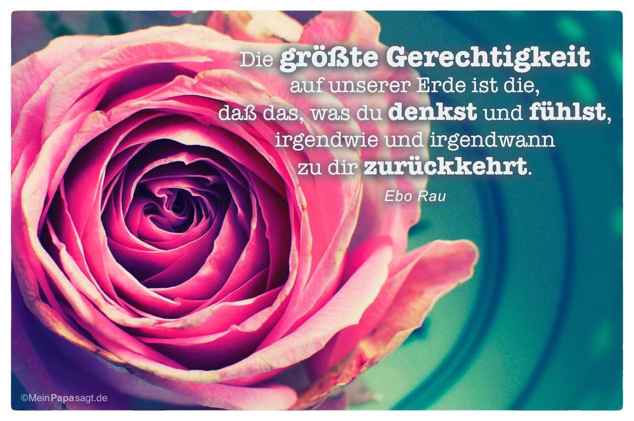 Rosa Rose mit dem Ebo Rau Zitat: Die größte Gerechtigkeit auf unserer Erde ist die, daß das, was du denkst und fühlst, irgendwie und irgendwann zu dir zurückkehrt. Ebo Rau