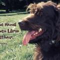 Der eigene Hund macht keinen Lärm...