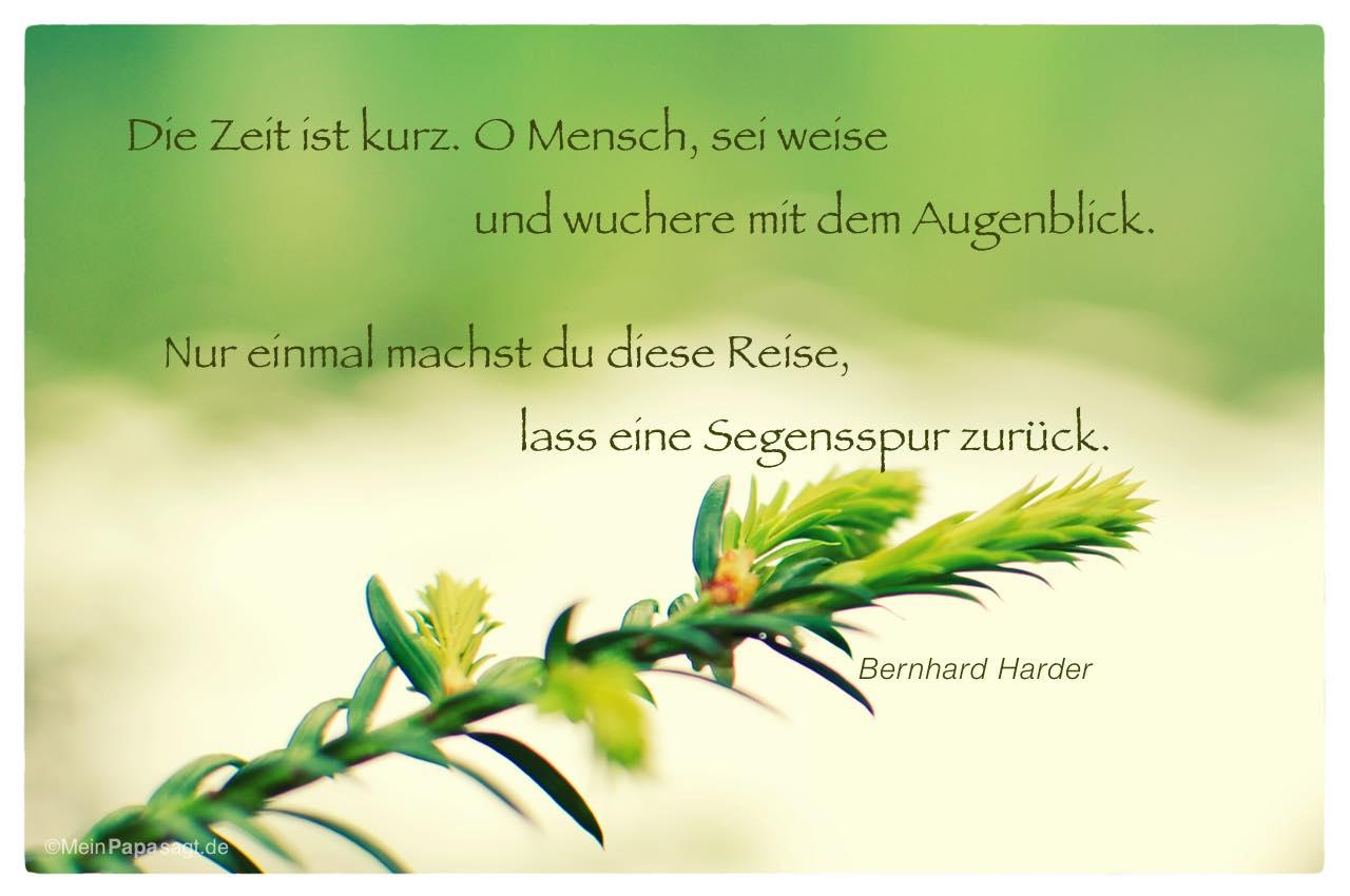 Tannenknospe mit dem Bernhard Harder Zitat: Die Zeit ist kurz. O Mensch, sei weise und wuchere mit dem Augenblick. Nur einmal machst du diese Reise, lass eine Segensspur zurück. Bernhard Harder