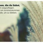 Gräser vor Himmel mit dem Dalai Lama Zitat: Gib denen, die du liebst, Flügel, um wegzufliegen. Wurzeln, um zurückzukommen und Gründe, um zu bleiben. Dalai Lama