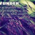 Wunder stehen nicht im Gegensatz zur Natur...