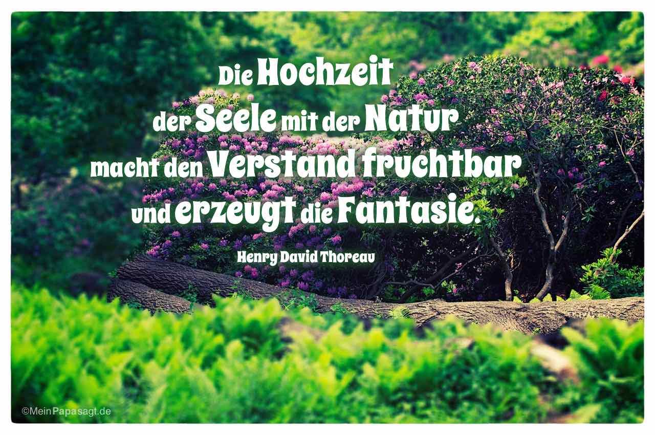 Gartenlandschaft mit dem Henry David Thoreau Zitat: Die Hochzeit der Seele mit der Natur macht den Verstand fruchtbar und erzeugt die Fantasie. Henry David Thoreau