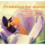 Biene auf Krokus mit dem Spruch: Frühling ist dann, wenn die Seele wieder bunt denkt.