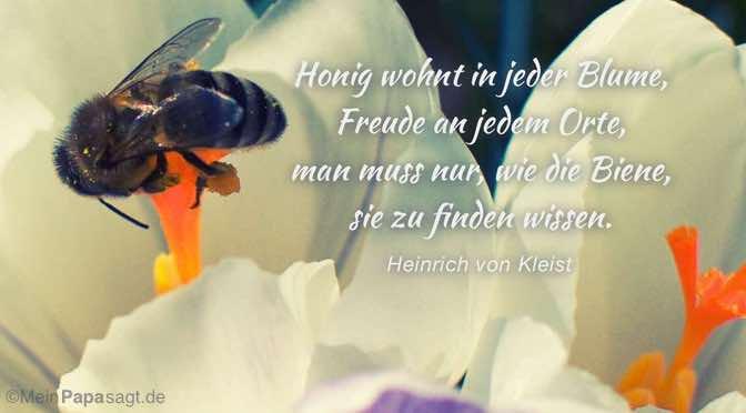 Honig wohnt in jeder Blume, Freude an jedem Orte…
