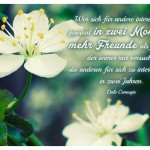 Blüten mit dem Dale Carnegie Zitat: Wer sich für andere interessiert, gewinnt in zwei Monaten mehr Freunde als jemand, der immer nur versucht, die anderen für sich zu interessieren, in zwei Jahren. Dale Carnegie