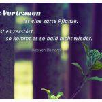Pflanze vor Absperrung mit dem Bismarck Zitat: Das Vertrauen ist eine zarte Pflanze. Ist es zerstört, so kommt es so bald nicht wieder. Otto von Bismarck