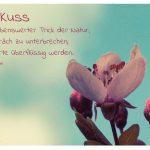 Blüte mit dem Ingrid Bergman Zitat: Der Kuss ist ein liebenswerter Trick der Natur, ein Gespräch zu unterbrechen, wenn Worte überflüssig werden. Ingrid Bergman