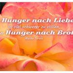 Blüte mit dem Mutter Teresa Zitat: Der Hunger nach Liebe ist viel schwerer zu stillen, als der Hunger nach Brot. Mutter Teresa