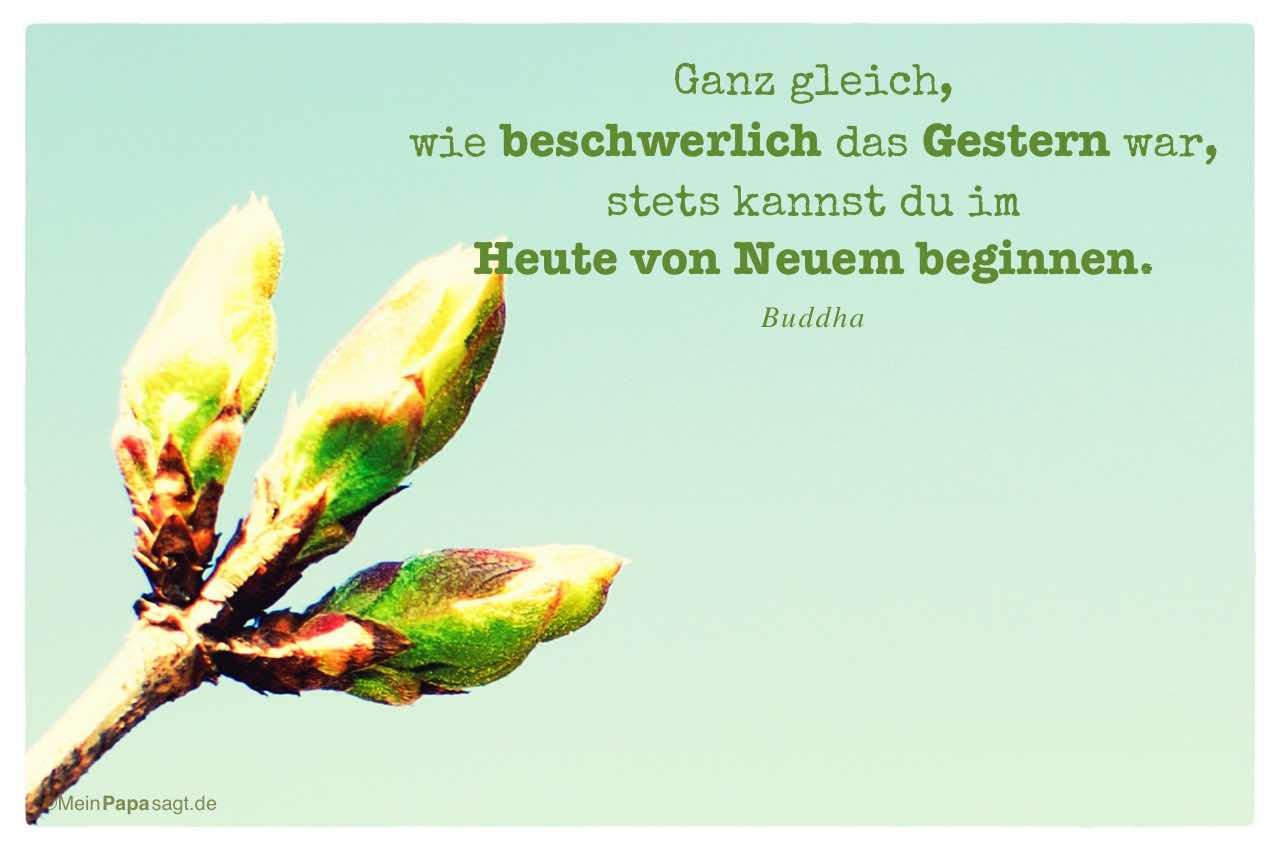 Knospen mit dem Buddha Zitat: Ganz gleich, wie beschwerlich das Gestern war, stets kannst du im Heute von Neuem beginnen. Buddha