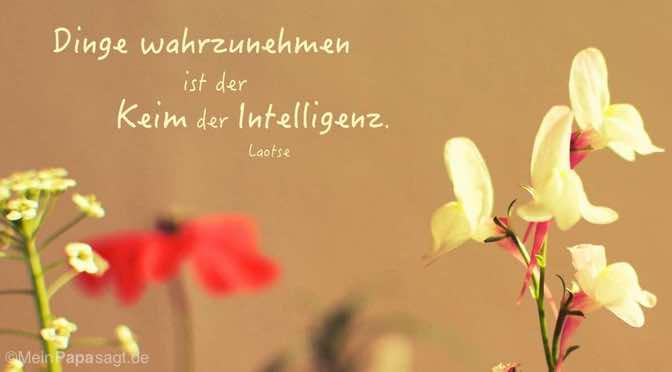 Dinge wahrzunehmen ist der Keim der Intelligenz.