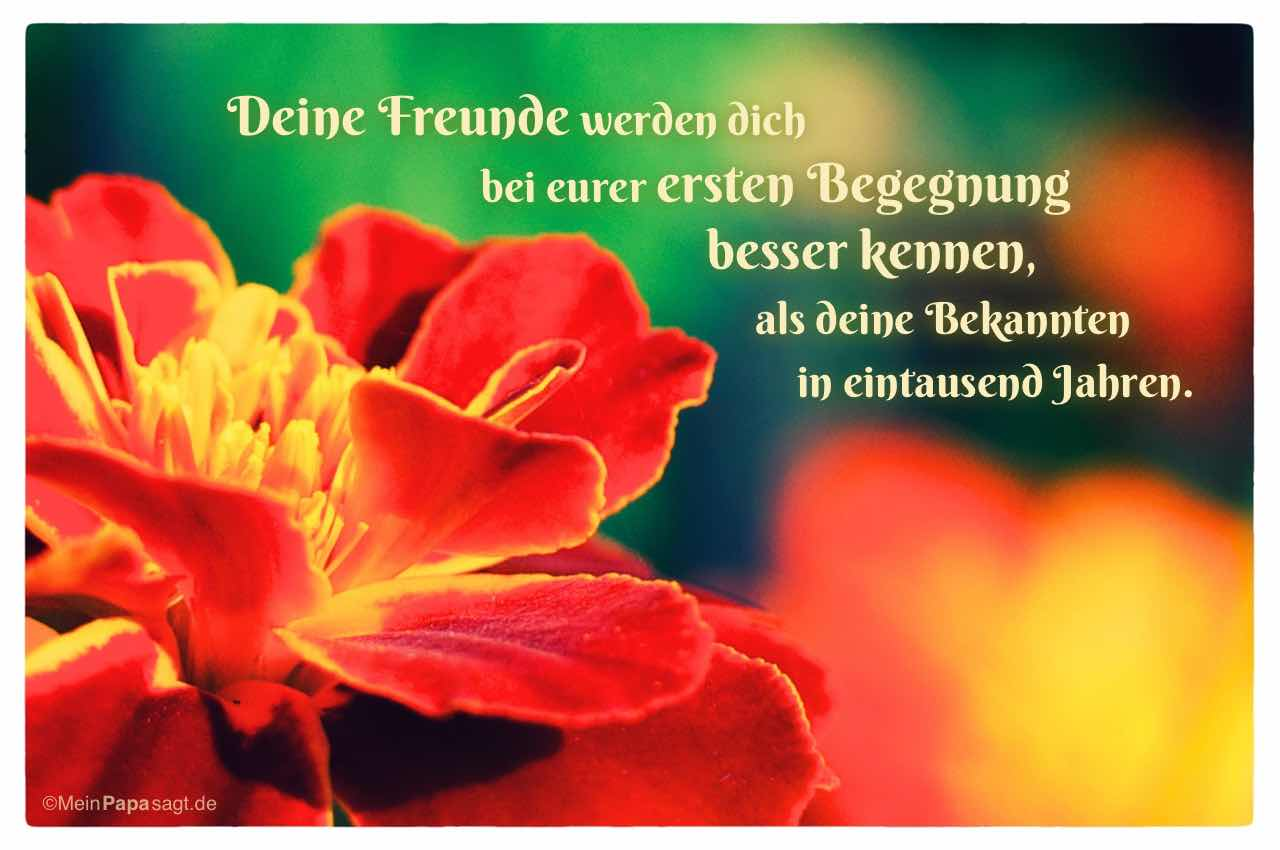Blüte mit dem Spruch: Deine Freunde werden dich bei eurer ersten Begegnung besser kennen, als deine Bekannten in eintausend Jahren.