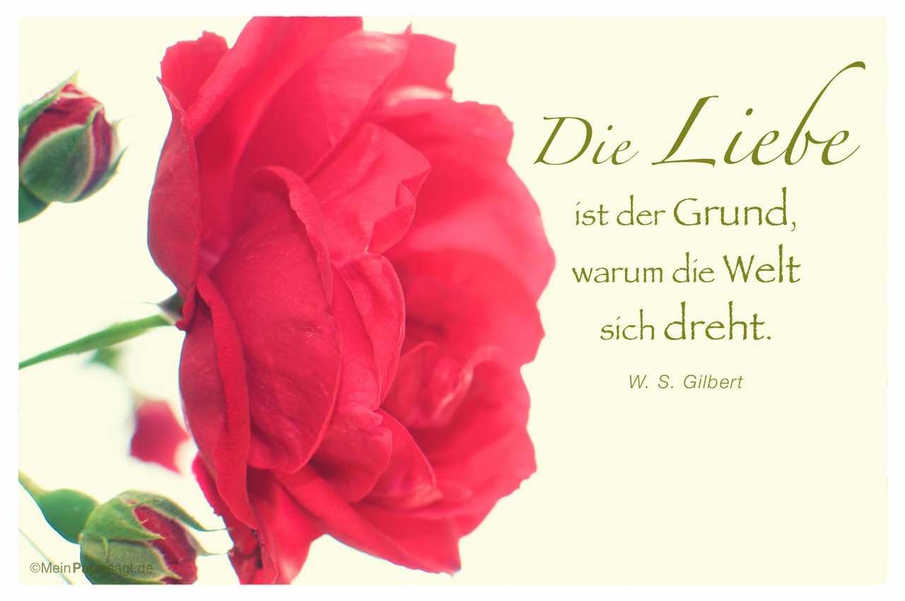 Rosen Gedichte Kurz
