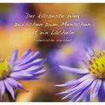 2 Blüten mit der chinesischen Weisheit: Der kürzeste Weg zwischen zwei Menschen ist ein Lächeln. Chinesische Weisheit