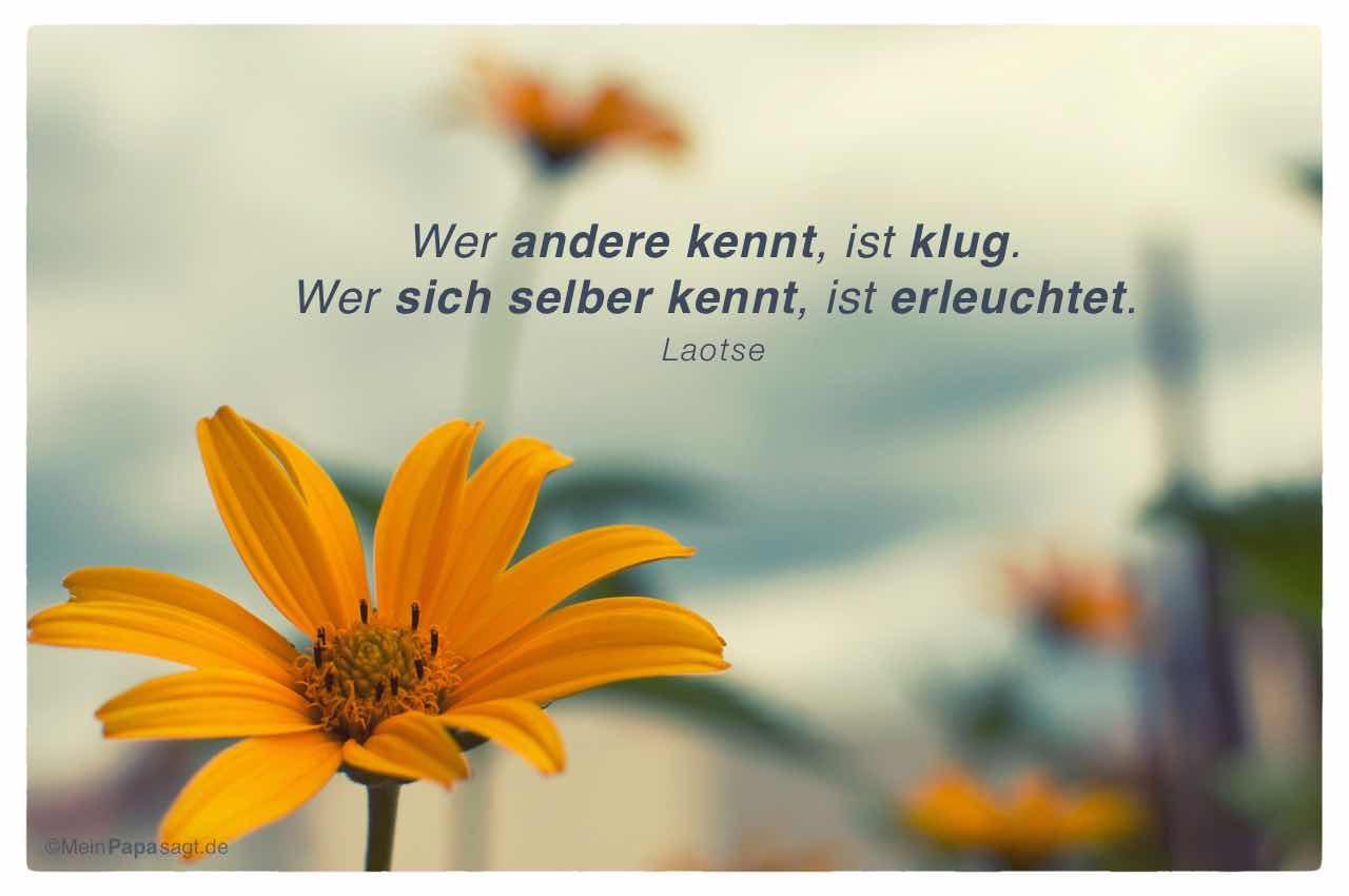Blüten mit dem Laotse Zitat: Wer andere kennt, ist klug. Wer sich selber kennt, ist erleuchtet. Laotse