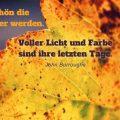 Wie schön die Blätter älter werden. Voller Licht und Farbe sind ihre letzten Tage...