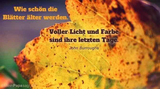 Wie schön die Blätter älter werden. Voller Licht und Farbe sind ihre letzten Tage…
