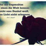 schattige Rose vor Licht mit einer japanischen Weisheit: Nur die Gegensätze lehren einen die Welt kennen: Wer nicht ums Dunkel weiß, kann das Licht nicht erkennen. Aus Japan
