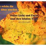 Herbstlaub mit dem Burroughs Zitat: Wie schön die Blätter älter werden. Voller Licht und Farbe sind ihre letzten Tage. John Burroughs