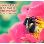 Hummel mit dem von Hofmannsthal Zitat: Das ganze Leben ist ein ewiges Wiederanfangen. Hugo von Hofmannsthal