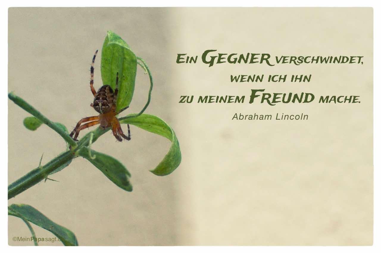 Spinne am Blatt mit dem Lincoln Zitat: Ein Gegner verschwindet, wenn ich ihn zu meinem Freund mache. Abraham Lincoln