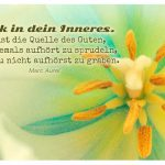 Blütenstempel (Stempel) einer Tulpe mit dem Aurel Zitat: Blick in dein Inneres. Da ist die Quelle des Guten, die niemals aufhört zu sprudeln, wenn du nicht aufhörst zu graben. Marc Aurel