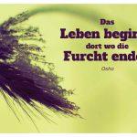vereiste Gräser mit dem Osho Zitat: Das Leben beginnt dort wo die Furcht endet. Osho