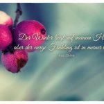 Winterliche Beeren mit der chinesischen Weisheit: Der Winter liegt auf meinem Haupt, aber der ewige Frühling ist in meiner Seele. Aus China